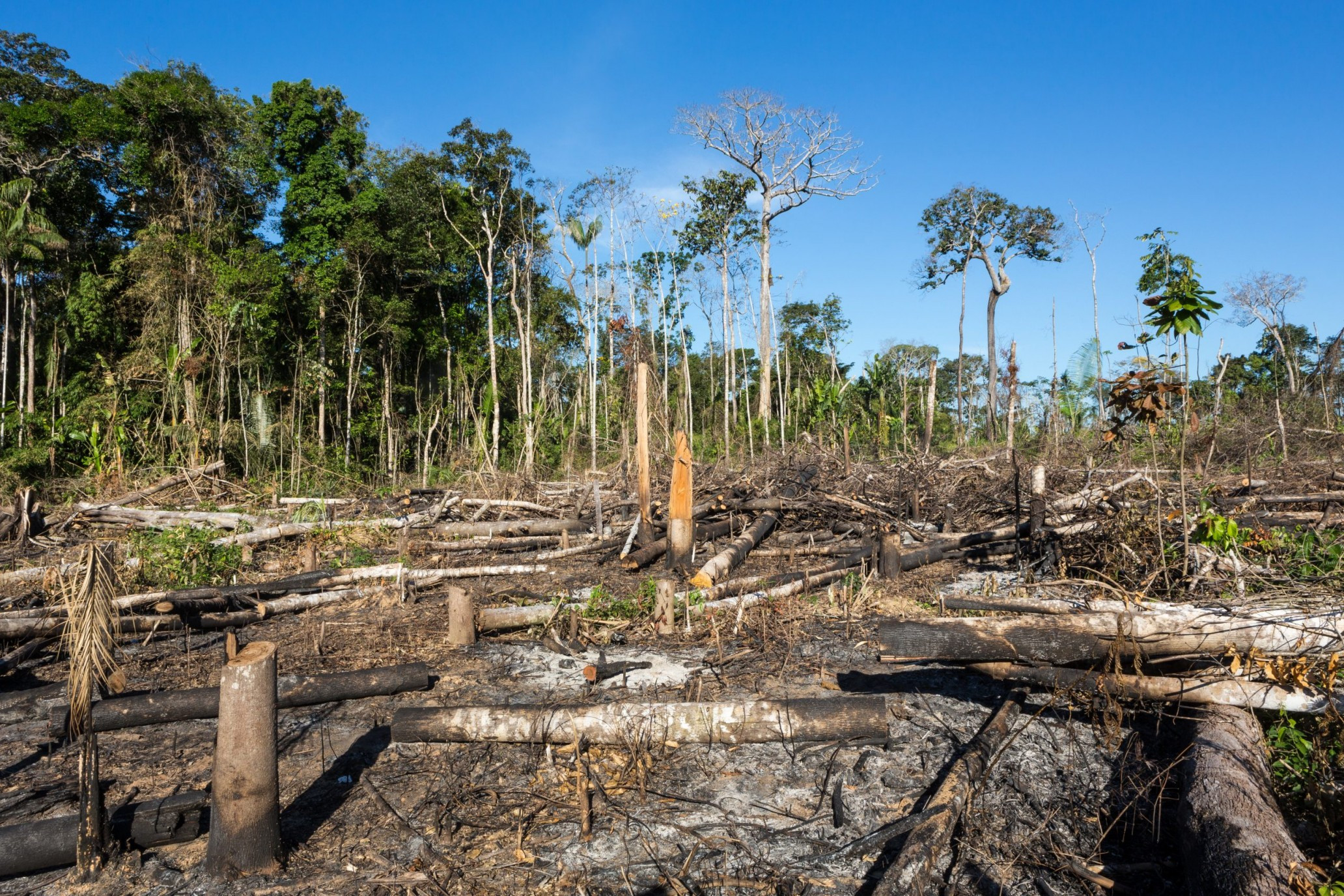 Deforestation and Human Rights