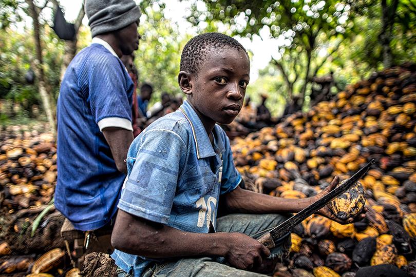 إمباكت الدولية تكشف عن تورط شركات شوكولاتة شهيرة بعمالة أطفال شبيهة بالعبودية
